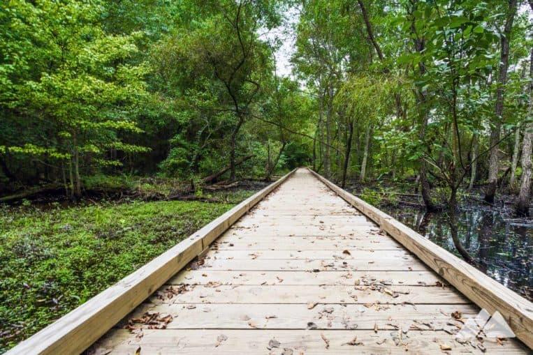 Sentier Cochran Shoals: marchez ou courez vers une vue imprenable sur la rivière Chattahoochee et un marais herbeux rempli d'animaux sauvages