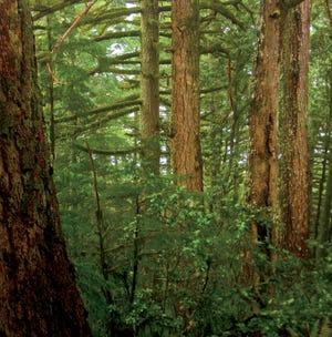 Recouverte d'une forêt ancienne, la montagne Humbug s'élève directement de l'océan sur la côte de l'Oregon, récompensant les randonneurs avec des vues spectaculaires sur le Pacifique.