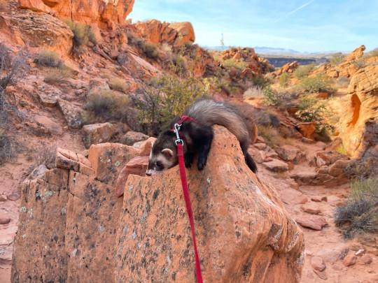 Jesse James dans la zone de loisirs de Red Cliffs dans l'Utah en 2021