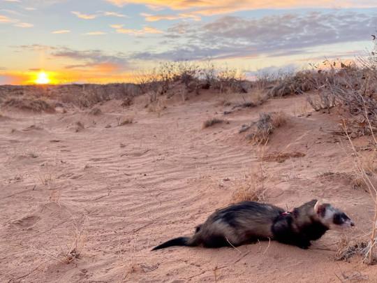 Jesse James vit un coucher de soleil dans l'Utah en 2021