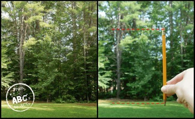 En dehors de la science, mesurer les arbres, des ABC aux actes