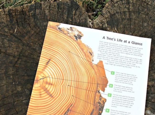 En dehors de Science Tree Rings Edventures