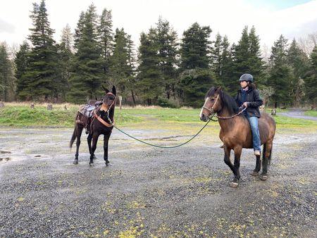 Une mule brune est conduite sur un harnais à travers un parking en gravier par une adolescente chevauchant un cheval brun avec une crinière noire.  Fond d'arbres à feuilles persistantes et un ciel gris.