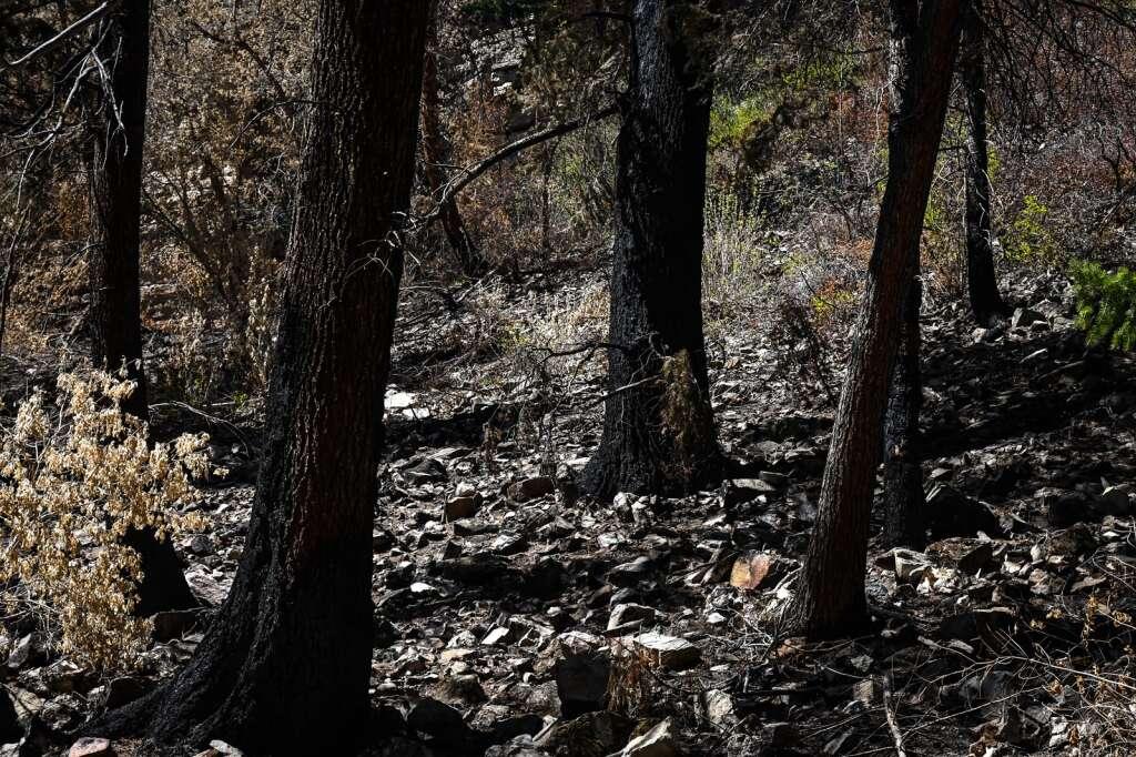 Les arbres et la végétation sont carbonisés le long du sentier du lac Hanging après l'incendie du ruisseau Grizzly l'an dernier.    Chelsea Self / Post indépendant